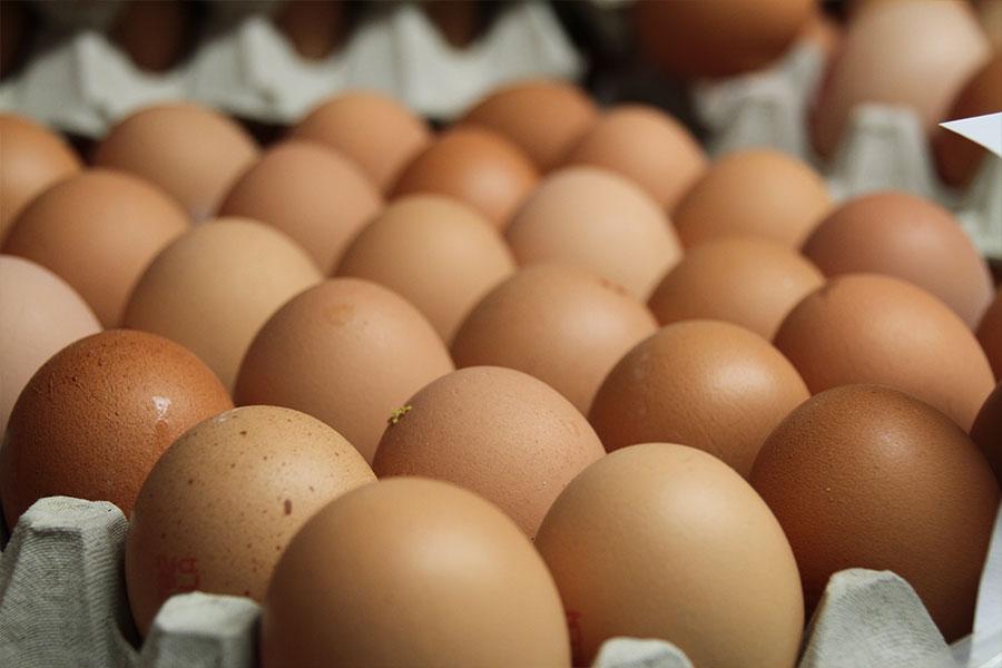 Uova: guida all'acquisto e al consumo consapevole  Uova