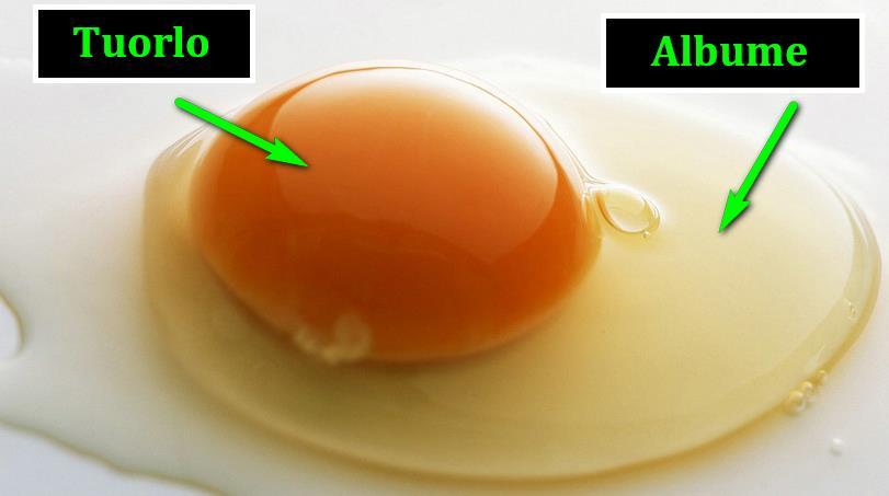Le uova: tuorlo e albume quali differenze? Albume